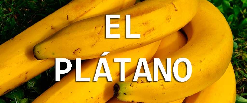 EL-PLATANO